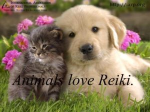 Reiki for the Longevity of You & Your Pets